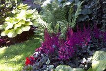 tropical shade garden