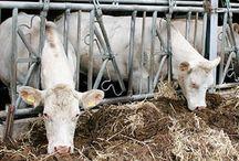 Urlaub auf dem Bauernhof in Deutschland / Für Familien mit kleinen - und größeren - Kindern, für Urlaub zu zweit in der Natur, für Oma und Opa mit Kids in der Nebensaison: Bauernhofurlaub in Deutschland ist immer im Trend, vor allem wenn Mitmachen möglich ist, Tiere erlebt werden und das Frühstück mit gesunden Hoferzeugnissen inkl. selbst gesammelter Eier besonders gut schmeckt.