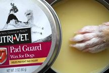Paw Wax for Dogs paws