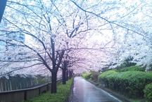 Tokyo, Japan / Where I live now.