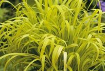 Ornamental Grasses / by Backyard Gardener