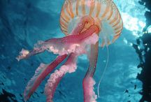 Ocean life / Lief in the butifull life inthe sea