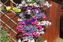 çiçek yetiştirmek