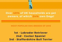 Top 10 UK Dog Breeds of 2016 / Find out which breeds make up the most popular pooches in the UK in 2016