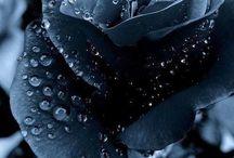Black ✔