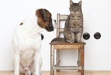 Benefits of Pet Wellness Plans