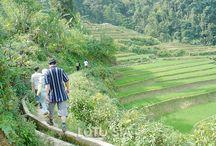 Sapa Hill Tribe Trek