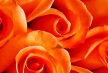Orange / by Pollyanna.is Webstore