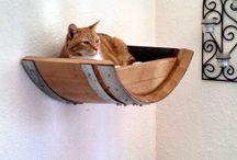 cat home ideas