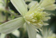 Flower Essence Inspiration