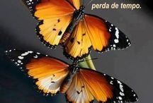 Natureza borboletas