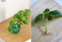 Pflanzentipps