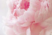 flowers / by Pollman Randolph