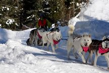 Winter Activities / Winter visitors experience spectacular scenery and a wealth of winter recreation options. Inn guest discounts available.