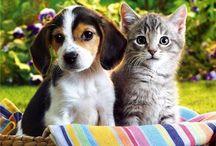 4 Ekim Hayvanları Koruma Günü