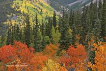 High Country Fall / Fall / autumn in the Rocky Mountains of Colorado. / by From The High Country