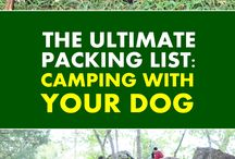 Outdoor Fun With Dogs / Spending time together outdoors with you best buddy is pretty much the one of the tidiest thing you can do with your dog. Here's how to do and enjoy it safely