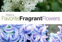 Plants Fragrant