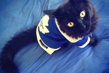 Hockey Pets / by Toronto Marlies