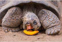 Tortoises / BECAUSE TORTOISES