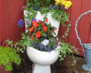 Toilet flower. Pot