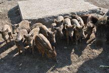 Zwierzyniec Bałtowski / Poznaj blisko 400 zwierząt, które żyją w Zwierzyńcu Bałtowskim