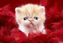 Cute Cat Photo