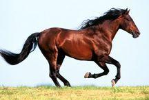 Horse / Horses rule !