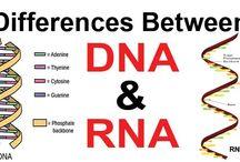 genetics/genomics etc.