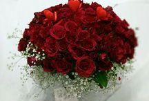 güller (Isparta Çiçekçi) / Isparta Yiğitbaşı Çiçekçilik ile Isparta'da pek çok adrese gül biletleri, gül vazoları, gül aranjmanları gönderebilirsiniz. Sevdiklerinize çiçek göndermenin en kolay yolu. Isparta Çiçekçi, Yiğitbaşı Çiçekçilik, 0 246 223 38 39