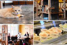 Cat Cafes