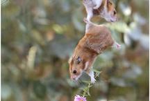 Cute Animals / by Tiffany Kyzer