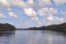 Guadeloupe Rivers / #Guadeloupe #Rivers #River #Landscape #travel
