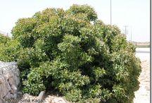 מדריך להכרת עצים