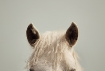 HORSE LOVE / by Patty Russes