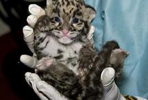 Wild Cats!! / by Janel Schultz