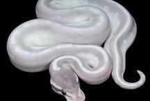 Snakes! / by Wren