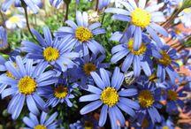 Piante fiorite