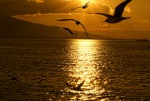 Seagulls / by diggerdawwwg