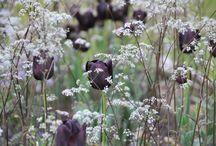 Blommor o blad