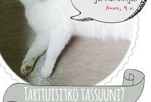 Tartu Tassuun / Parhaat asiat maan päällä ovat pelastettuja.  PrimaCat etsii yhdessä Pirkanmaan eläinsuojeluyhdistyksen kanssa rakastavia koteja kodittomille kissoille Tartu Tassuun -projektin kautta.   Tässä taulussa voit tutustua kodittomiin kissapersooniin. Mikäli sydämeesi mahtuisi yksi viiksekäs, tutustuthan projektin ja tällä hetkellä kotia etsiviin sivuilla: https://www.facebook.com/tartutassuun