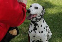 Good Dog! / Training,  tips, tricks, and ways to earn treats.