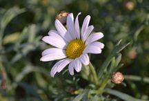Lente / Voorjaarsbloemen