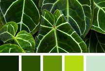 Kleuren Quinten