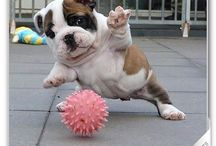 Dog i love you