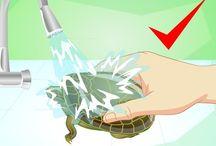 Ed's turtles