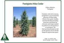 Cool Conifers / Here are ideas that live in the Mid-Columbia for shape, color, and texture.