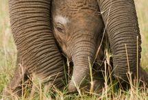 cuccioli & elefanti