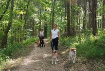 Traveling with Your Dog / #Dogs make a great #travel companion #Hiking #Camping, Daily #errands