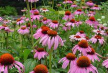 Native flower garden